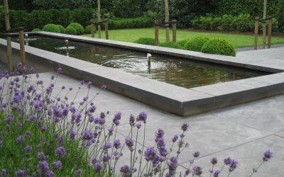 7 planten voor in uw tuin die insecten aantrekken