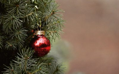 Zo brengt u de kerstsfeer in uw tuin