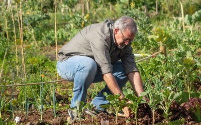 Dit zijn de opties voor een eetbare tuin
